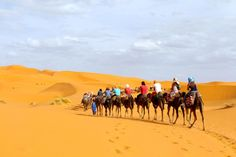 MERZOUGA CAMEL TREKKING DESERT TOURS CLASSIC CAMEL TREKING 1 NIGHT IN ERG CHEBBI MERZOUGA DUNES  contact us at www.saharagatetours.com