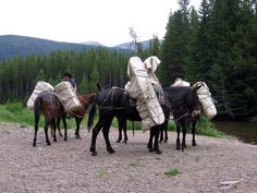 Mules Carry all the Gear into South Fork photo: Jessie Thiel Bucking Bulls, South Fork, Alpine Lake, Rafting, Day Trip, Tack, Jessie, Romania, Wilderness