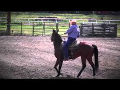 Lake County Horseman's Association Horse Show 6-28-2015
