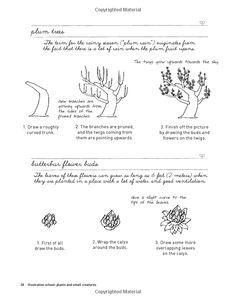Illustration School: Let's Draw Plants and Small Creatures: Sachiko Umoto: 9781592536474: Amazon.com: Books