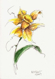 """Original artwork of a single daffodil flower rendered in pen, ink and watercolor. It is titled """"Daffodil Bending in the Wind"""" and is signed and dated at the bottom with the title on the back. The petals of the daffodil flower and the one leaf all seem to bend and bow adding"""