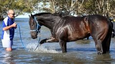 Famous Race Horses - Black Caviar ..The Best of the Best.Play ...
