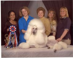 Because it takes that many exceptional groomers to pull off that kind of haircut! Show poodles is serious skill Doggies, Dogs And Puppies, Kinds Of Haircut, Standard Poodles, Pet Grooming, Health And Safety, Pets, Gallery, Amazing