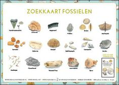 De Fossielenontdekgids