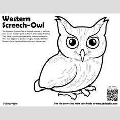 Cute Bird Coloring Pages (page 2) by Birdorable - Free Downloads Owl Facts, Bird Facts, Light Blue Eyes, Yellow Eyes, Western Screech Owl, Bird Coloring Pages, Barred Owl, Cute Birds, Free Downloads