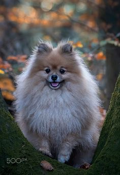 Yoshi... by Ton lع Jeune / 500px Yoshi, Funny Dog Videos, Funny Dogs, Doggies, Animals, Little Puppies, Animales, Animaux, Pet Dogs