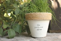 Jackson Chive by PlantPuns on Etsy