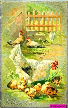 Chickens. Vintage Easter Card.  suzilove.com