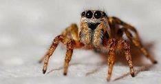 Nastříkejte tento olej a už nikdy více doma neuvidíte pavouky