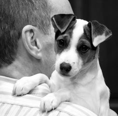 16 Things Only Jack Russell Parents Understand - BarkPost