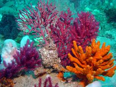 Underwater Sea Life | Overview General Description Conservation Activities