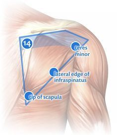 Massage Therapy for Shoulder Pain: Trigger point #14 and closely related spots.