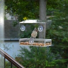 Clear Window Squirrel Proof Bird Feeder    Window bird feeders-in Feeding & Watering Supplies from Home & Garden on Aliexpress.com | Alibaba Group
