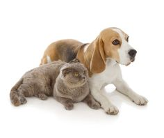 Best and Worst Dog Breeds to Live with Cats - TheCatSite.com Community
