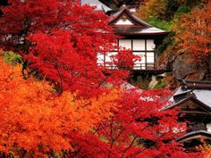 Yamadera: Autumn in Japan