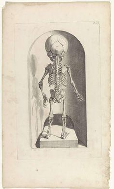 Pieter van Gunst | Anatomische studie van het skelet van een foetus (achterkant), Pieter van Gunst, Gerard de Lairesse, weduwe Joannes van Someren, 1685 | Anatomische studie van de achterkant van het skelet van een foetus. Bovenaan rechts genummerd T. 102.