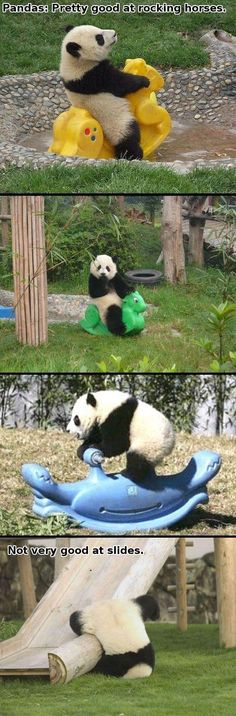 Pinned this due to not only the humor, but the perfect adorableness of pandas #Funny