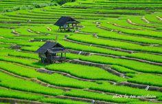"""""""นาขั้นบันได"""" บ้านกองกาน จ.เชียงใหม่ ที่หมู่บ้านกองกาน อ.แม่แจ่ม อีกหนึ่งความงดงาม ที่หาชมได้ในช่วงฤดูฝน ชมนาข้าวขั้นบันไดที่เขียวขจี ช่วงนี้กำลังจะออกรวงสวยงาม สามารถขับรถขึ้นไป ชมนาขั้นบันไดมุมสูง หรือเข้าไปชมภายในนาก็ได้  www.unseentourthailand.com"""