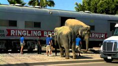 Chasing The Circus Train (3) Elephant Walk - 7/26/10