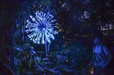 Eden Blooms, Bruce Munro: Light at Franklin Park Conservatory