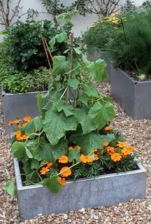 Marigolds are great to plant around veggies!  They keep bugs away!