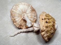 Fabric Mushroom, Toadstool, Fungus, Funghi, Handmade soft sculpture by Pennybright Studios