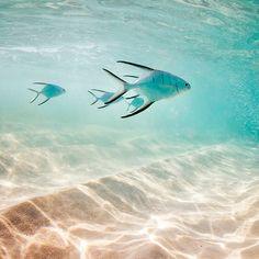 Fish near shore - @elenakalis- #webstagram