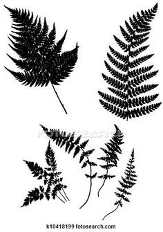 Clip Art of vector silhouette fern k10418199 - Search Clipart, Illustration Posters, Drawings, and EPS Vector Graphics Images - k10418199.eps