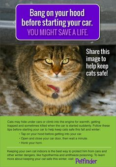 Repin to keep cats safe! Click through to learn more about this danger for cats!