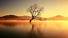 Lone Tree Morning  Landscapes photo by JomyJose2 http://rarme.com/?F9gZi