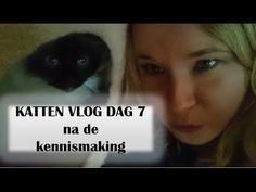 KATTEN | Nieuwe kat in huis DAG 7 na de kennismaking