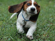 beagle - Αναζήτηση Google