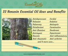 Benzoin Essential Oil can be used for many things, including helping your breathing, digestion and skin. Find out more about Benzoin Essential Oil here! List Of Essential Oils, Essential Oil Uses, Young Living Essential Oils, Benzoin Essential Oil, Holistic Remedies, Natural Remedies, Massage Benefits, Healing Oils, Natural Oils