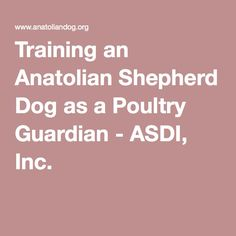 Training an Anatolian Shepherd Dog as a Poultry Guardian - ASDI, Inc.