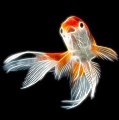 Fan Tail Gold Fish Fractal Art by Bob Smerecki.