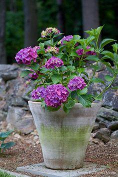 Purple flowers in concrete planter