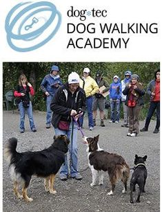 Training classes & certification for dog walkers. Start a dog walking business