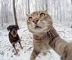 Meh and ma bruder😂 Selfie Gato, Selfies, Cute Cats, Best Friends, Instagram, Awesome, Dogs, Cat Stuff, Beautiful