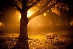 Google Image Result for http://1.bp.blogspot.com/-tWQAnMPDldQ/T13nmoZyxtI/AAAAAAAAIwY/vOzQxwsLCXw/s1600/Thanksgiving-Fog-Albany-NY-New-York-gold-golden-tree-chai-walk-lonely-alone-beauty-leaves.jpg