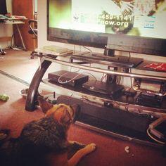 "Kyreah watching ""Bad Dog"" on Animal Planet."