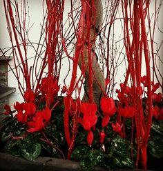 #Winter #container #bedding at my #Surrey clients. #red #holidays #christmas #bright