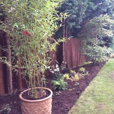 After - willow screening winding between the tree trunks - by Chris Milner of Milnscapes, with a golden stemmed bamboo to complement the existing camellia
