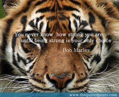 You never know how strong you are…The Quoted Posts | The Quoted Posts