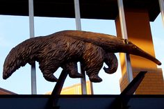 College Town Tours: The Best of Orange County, CA #UCI #UCIrvine #Anteater @UC Irvine UCI