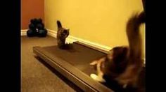 Yahoo! Video Detail for Cats on the Treadmill