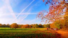 Hampstead Heath, London - I'd love to return in spring or autumn