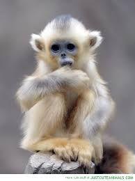 Image result for cute monkeys