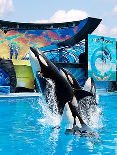 Sea World Orlando: (or San Diego) http://www.familycircle.com/family-fun/travel/best-florida-destinations-for-families/#page=2