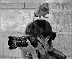pigeon giving photography lesson
