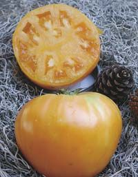 Ark of Taste : Orange Oxheart Tomato : Slow Food USA